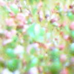 watergarden0321-1.jpg